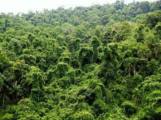 Rainforest by dabdiputs via Flickr.